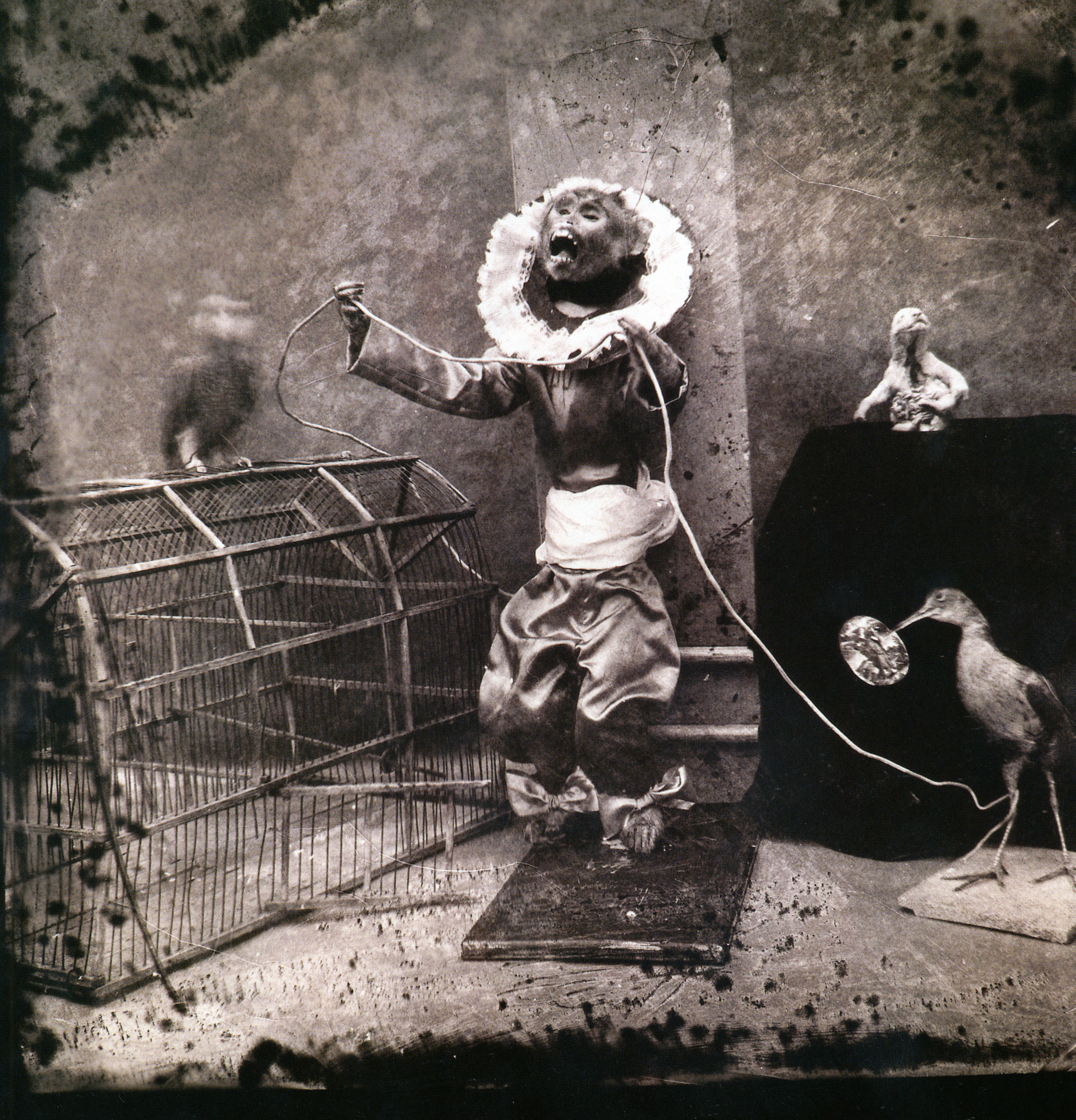 a biography of joel peter witkin an american photographer Joel-peter witkin is an american artist  find an in-depth biography,  providing a concise insight into the working methods and ideologies of the photographer.